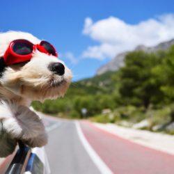 ¡Viaja con tu mascota sin preocupaciones!